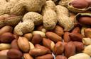 The Lancet: estudo STOP II avalia a eficácia da imunoterapia oral para a dessensibilização de crianças com alergia ao amendoim