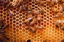 Eficácia do mel em comparação com corticosteroide tópico para o tratamento de aftas recorrentes: estudo clínico randomizado