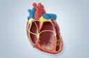 Estatísticas americanas indicam que doenças cardiovasculares são a maior causa de morte entre as mulheres