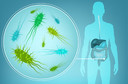 Estudo descobre que microbiota intestinal pode controlar a função imune antitumoral no fígado