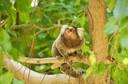 Evidências de infecção natural pelo vírus da Zika em primatas não humanos no Brasil