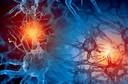 Neurônios humanos do hipocampo acompanham momentos em uma sequência de eventos, marcando o tempo