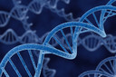 Pessoas com síndrome de Down têm menor incidência de tumores sólidos: cientistas americanos encontram uma explicação para este fato