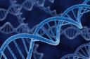 Primeira mutação detectada no vírus influenza H1N1 não está associada à maior virulência