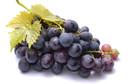 Unicamp: bagaço da uva pode ajudar na redução de processos inflamatórios